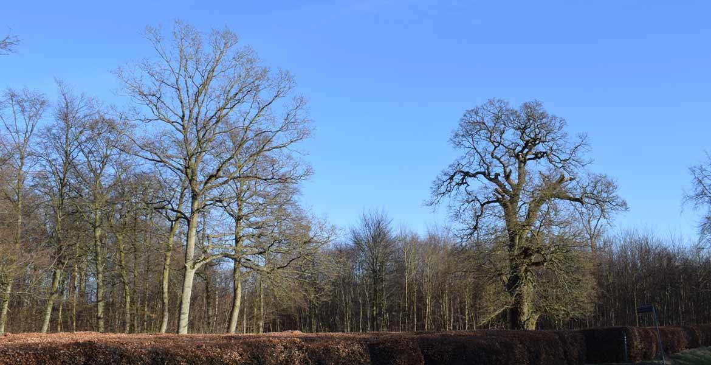 Corselitze skovene